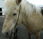 Horseriding_2